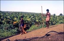 India, Goa 114