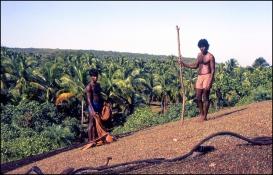 India, Souther India, Rameshwaram 114