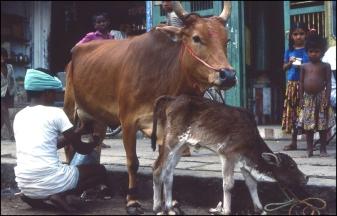 India, Southern India, Madurai, 109